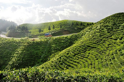 10 Things To Do In Darjeeling