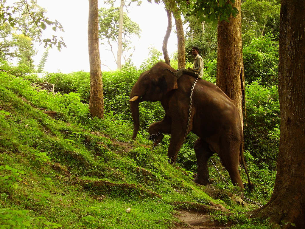 10 Things To Do In Coorg To Include In Your Checklist